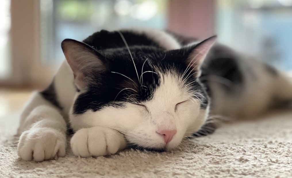Missing cat returned: Pet owners can use the ivault app to find lost pets.